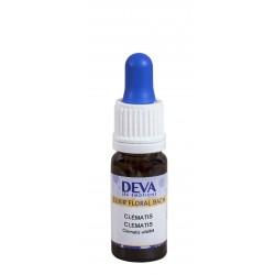 Elixir Floral Clématite (Clematis) - 10ml